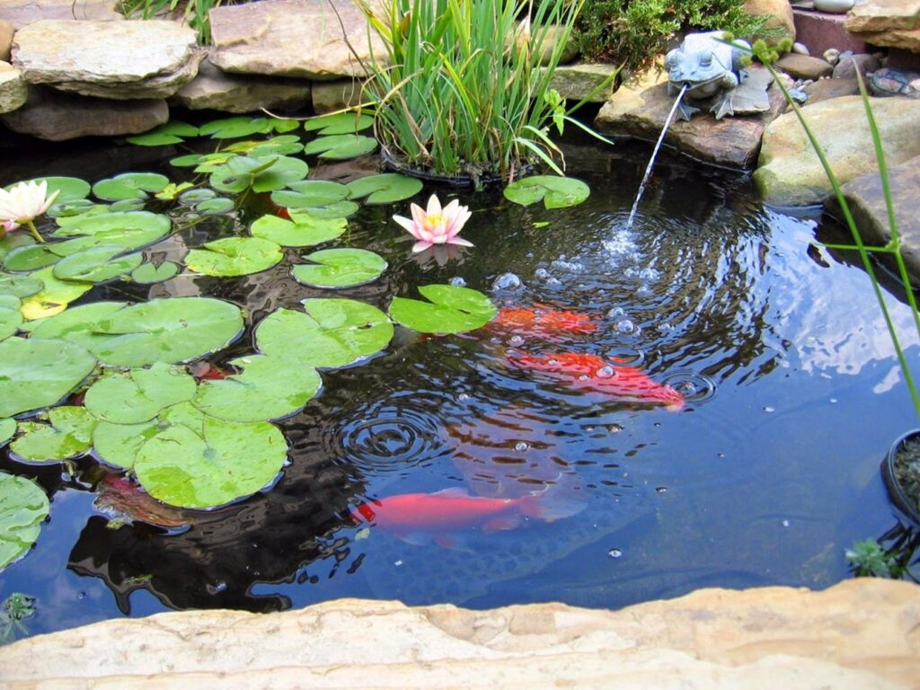 fish pond 02